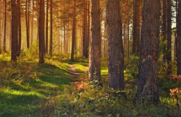 September in the forest 208135